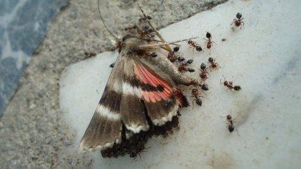 dead_butterfly_by_klarissimus-d5j88h1